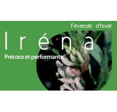 Féverole d'hiver - Irena - BIO