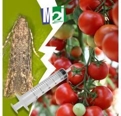 Diffuseur seringue Mineuse Tomate