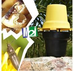 Piège Pitfall noir (taupins maïs et insectes de stockage)