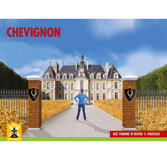 Blé tendre d'hiver - Chevignon