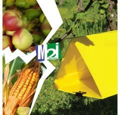Piège Delta jaune (pyrale maïs, sésamie maïs, mouche de la carotte, mineuse tomate, carpocapse pomme)