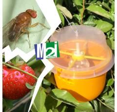Piège Droso pour la drosophile des fruits rouges et noirs